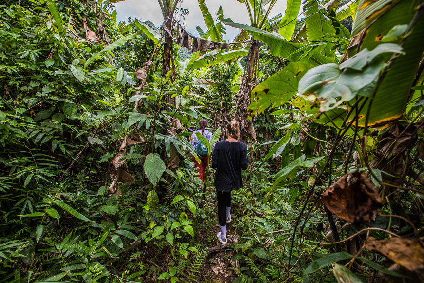 Hiking through the jungle of Phong Nha.
