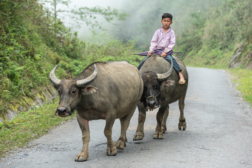Buffalo and boy in Pu Luong
