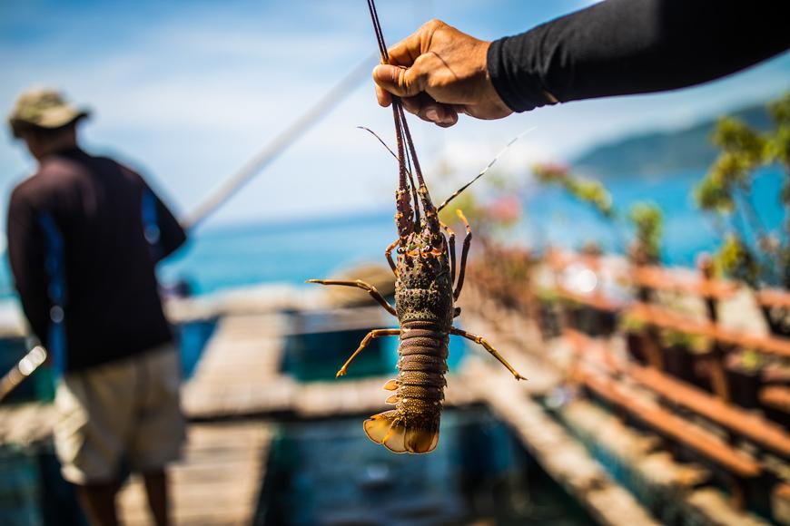nha trang seafood vietnam tourism